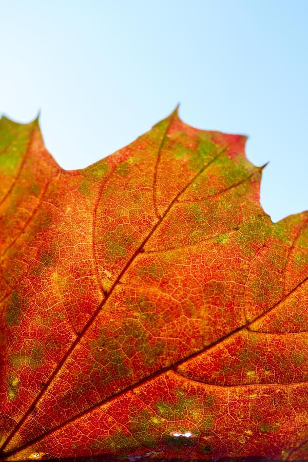 autumn calling by stachelpferdchen