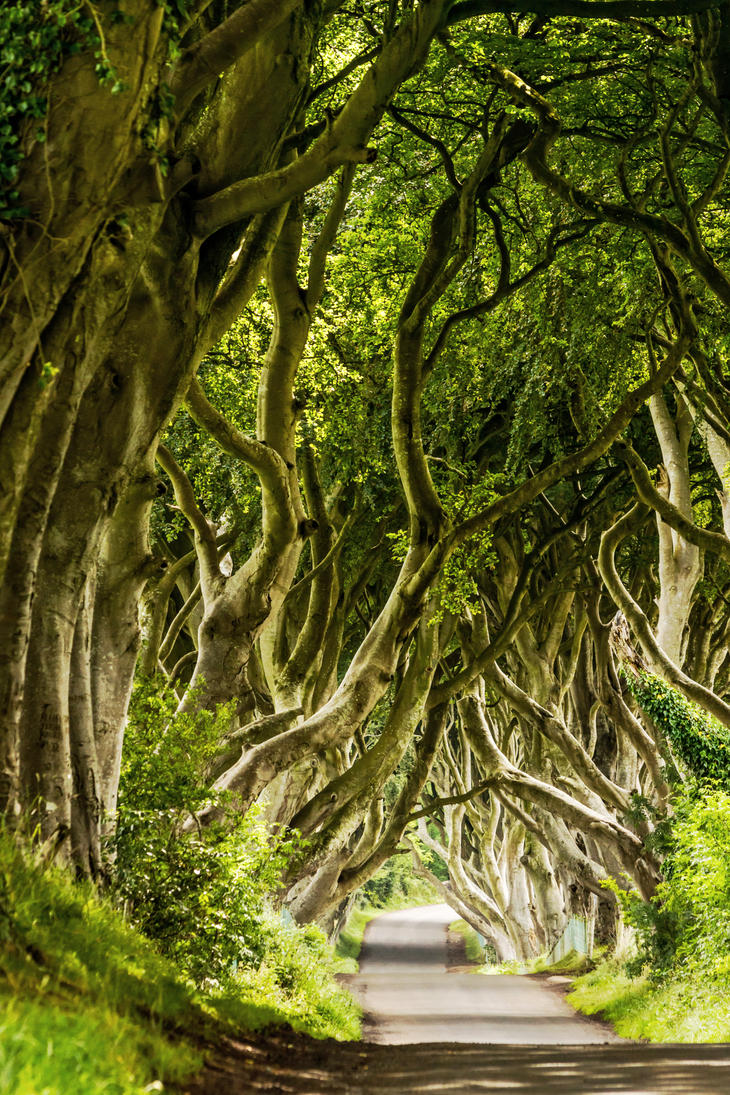 the bright hedges by stachelpferdchen