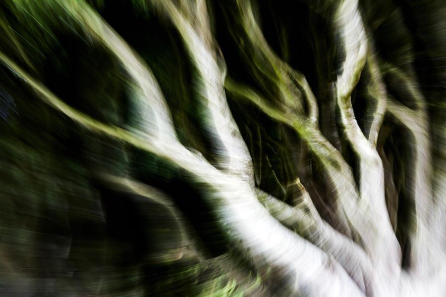 geisterwald by stachelpferdchen