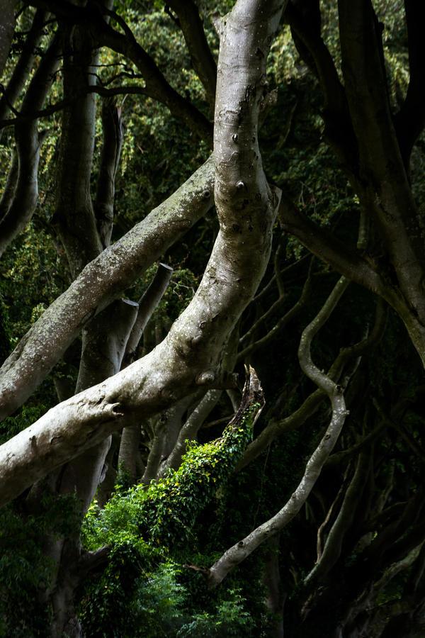 the dark hedges by stachelpferdchen