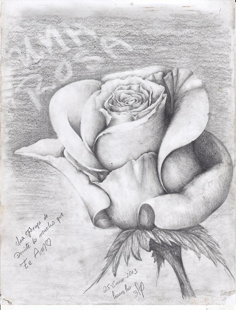 una rosa a lapiz