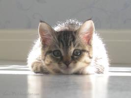 Kitten by Love-First