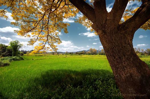 Tree spread by xpress2gaurav