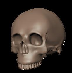 Skull by feline-soul