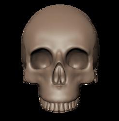 Skull Front View by feline-soul