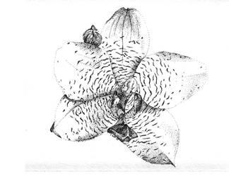 Orchid by feline-soul