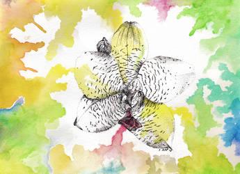 Of the Wind by feline-soul