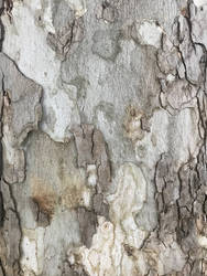 Tree Bark by lithiumserver