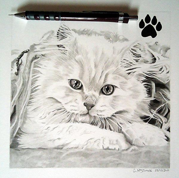 Jasper (Fur Study) by Cr1msonCloud