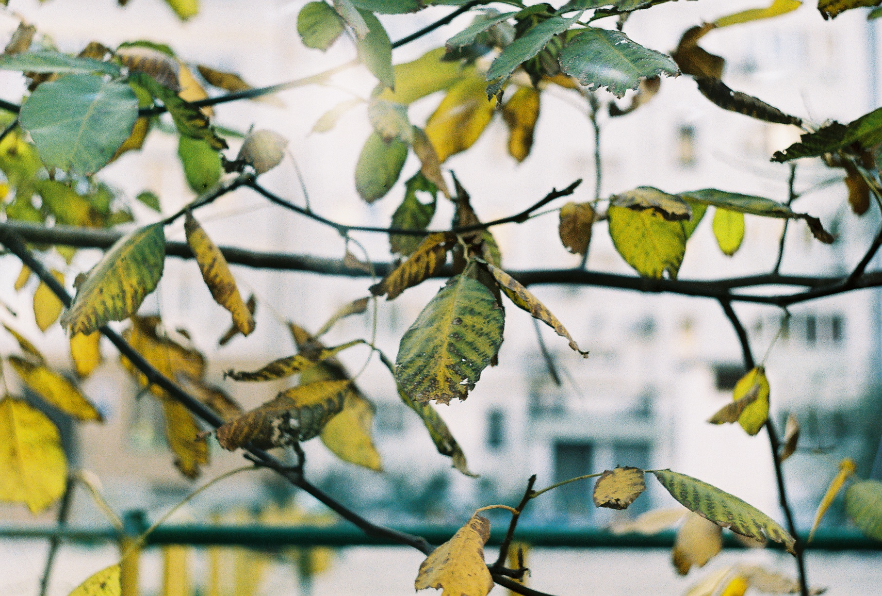 autumn. zenit by maandarinaaa