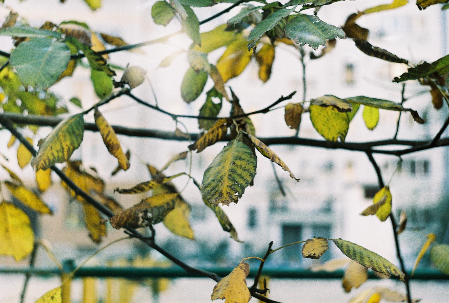 autumn. zenit by maandarinaaa
