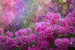 every flower must grow through dirt by missyborealis