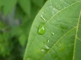Leaf's tears by Lilylou