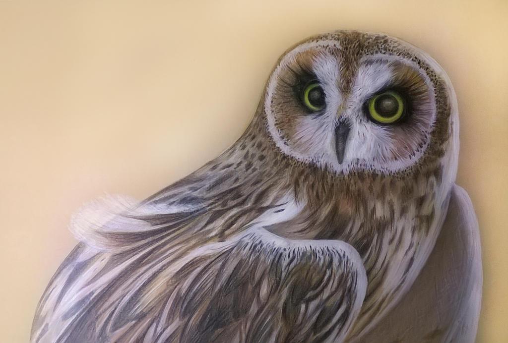 Owl_01 by vvica