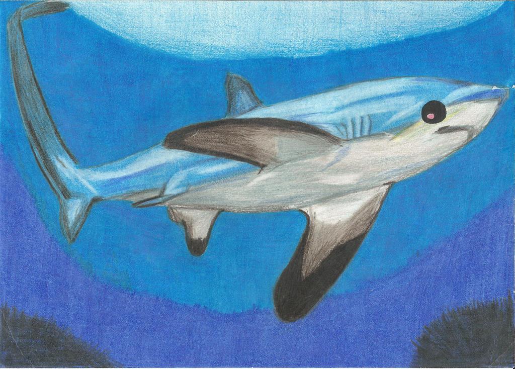 Thresher shark by kjzombiekiller on deviantart for Thresher shark coloring page