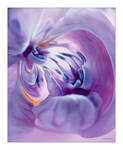 Psychotropic flower