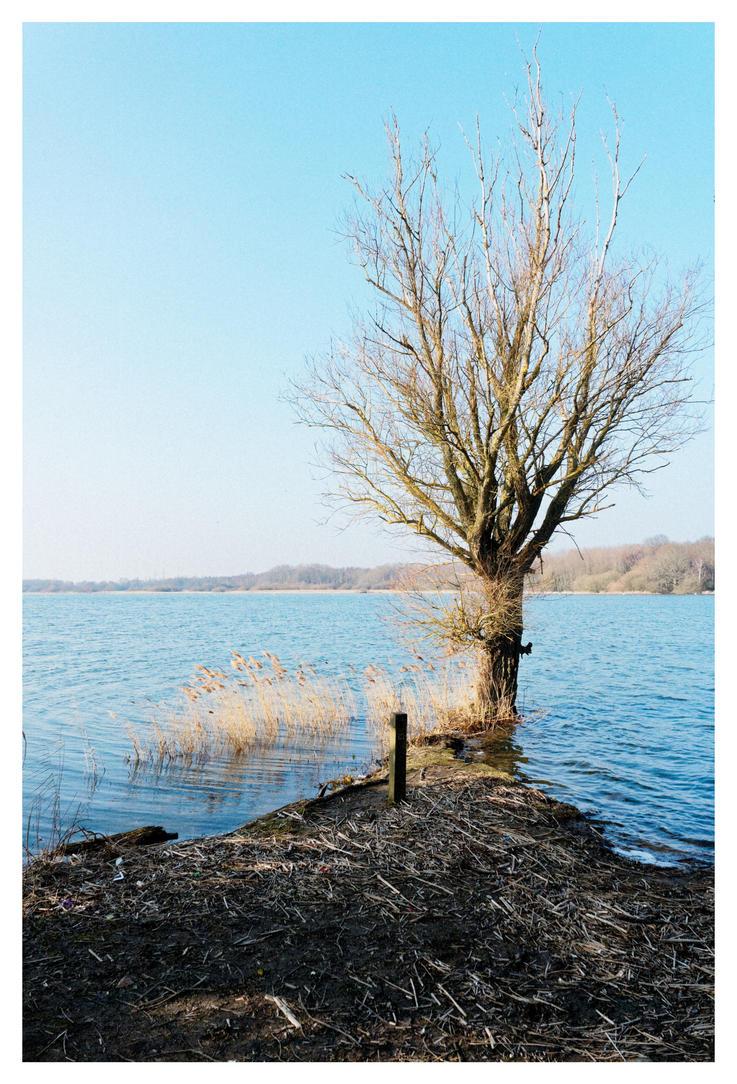 Lonely tree by SuBWaReZ