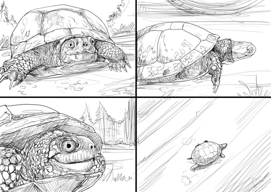 turtle. by chrisscalf