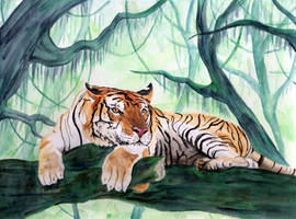 Tiger by Eilerinn