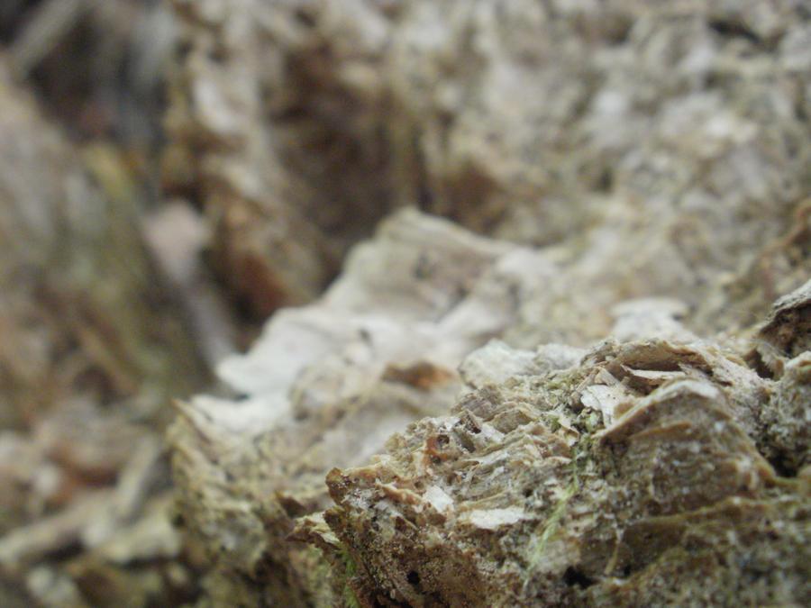Macro wood by DeadHeadStock