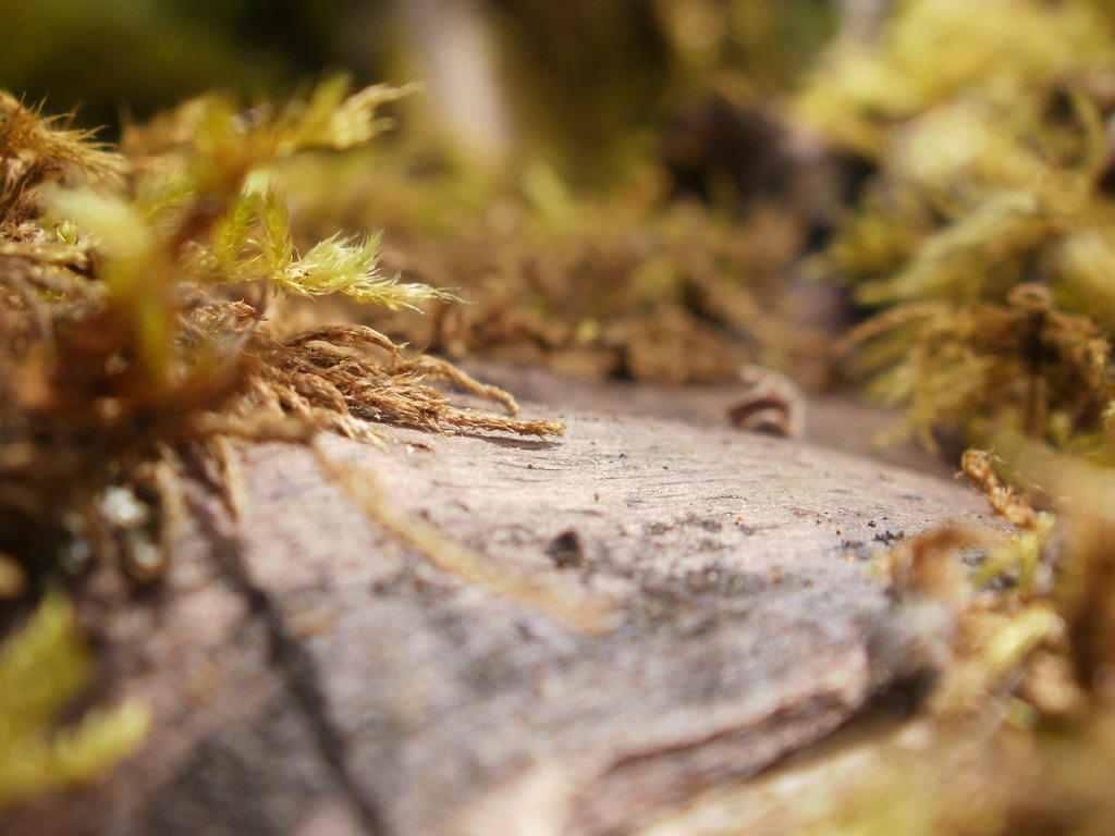 Moss Forest by DeadHeadStock
