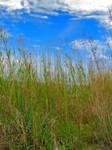 Grassy sky