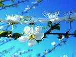 Flowers 46