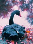 Black Swan 3