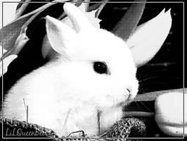 Dear Rabbit by lilqueen