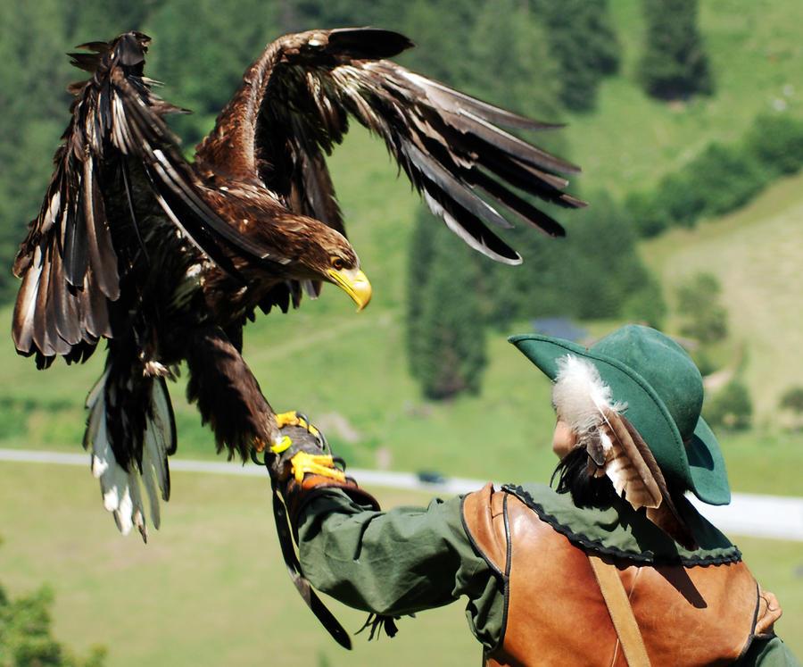imperial eagle has landed by CaveCanem42