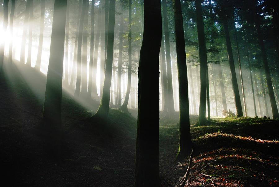 awakened forest by CaveCanem42
