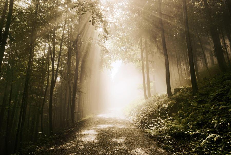der goldene Mittelweg by CaveCanem42