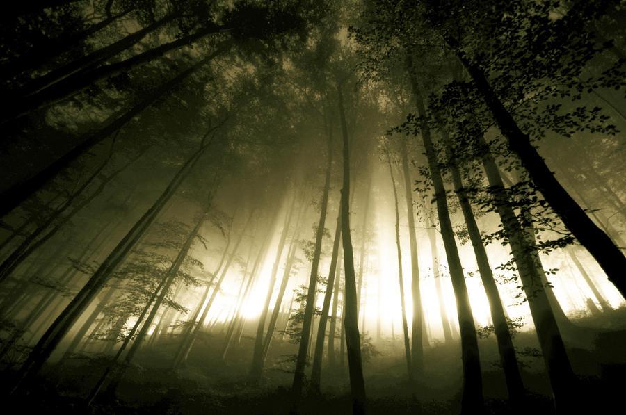 Nachts im Wald by CaveCanem42