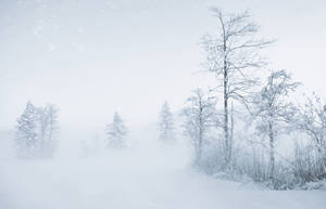 whiteout by CaveCanem42