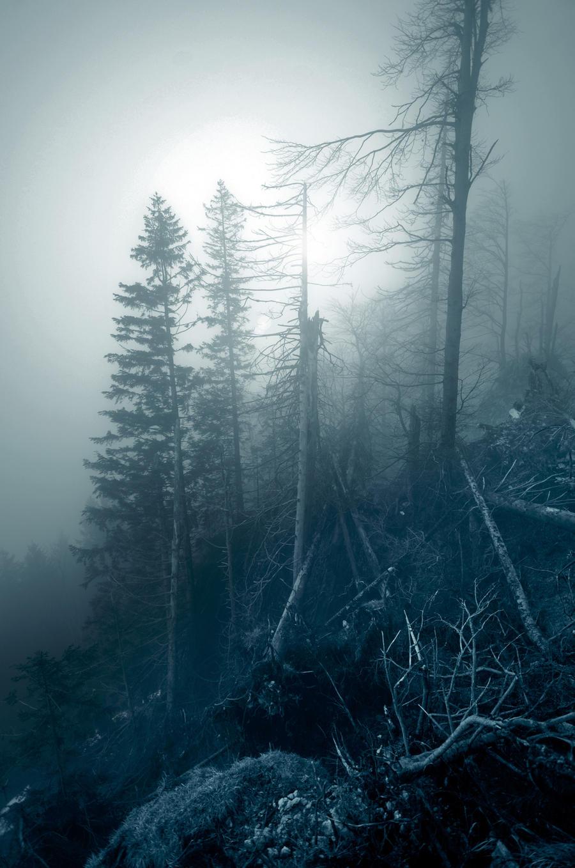 act of nature by CaveCanem42