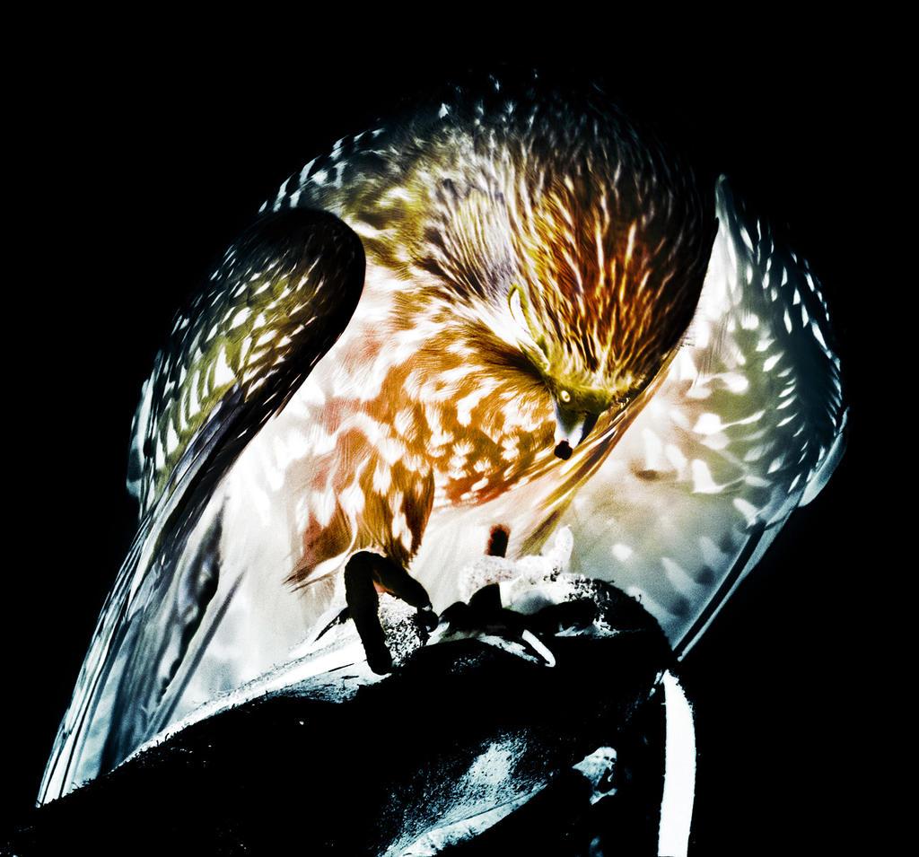 Nocturnal Hunter by CaveCanem42
