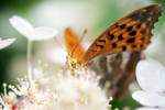 Searching for Nectar by CaveCanem42