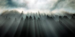 Incidence of Light