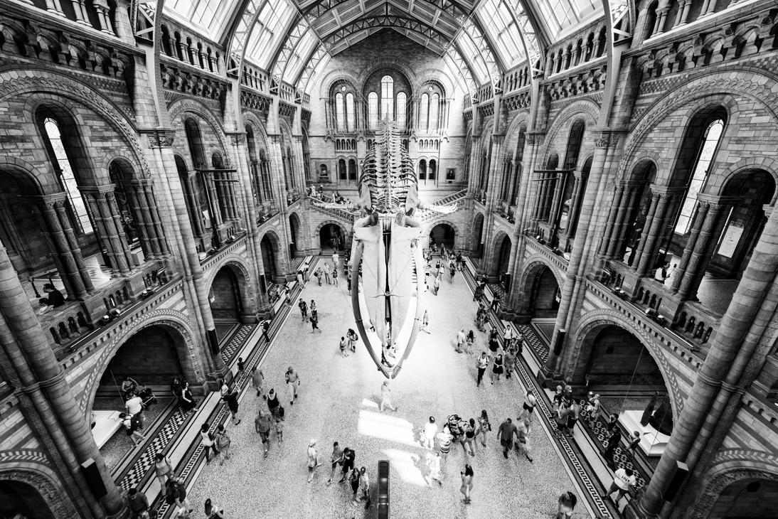 Natural History Museum by CaveCanem42