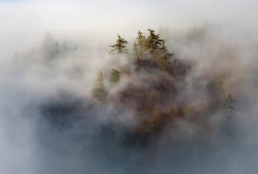 Fog On Top