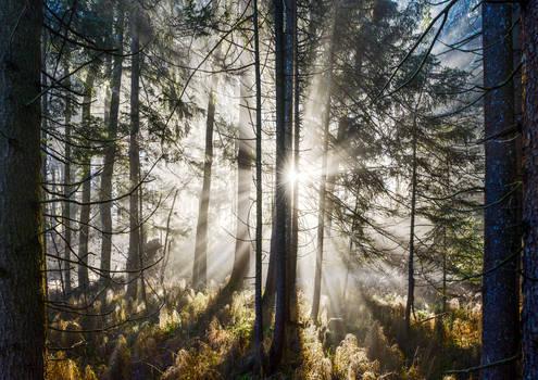 Framed Forest