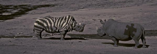 Puzzled Rhino by benasayer