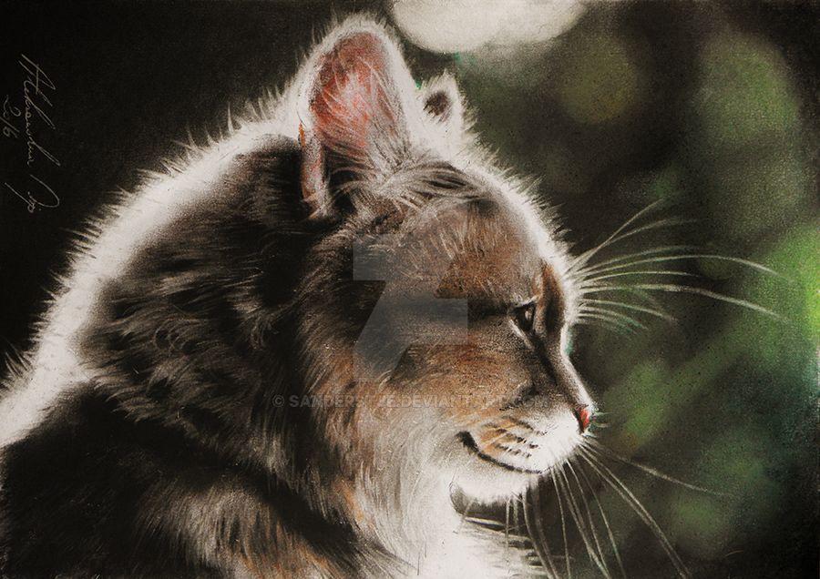 Cat in the light by sanderstje