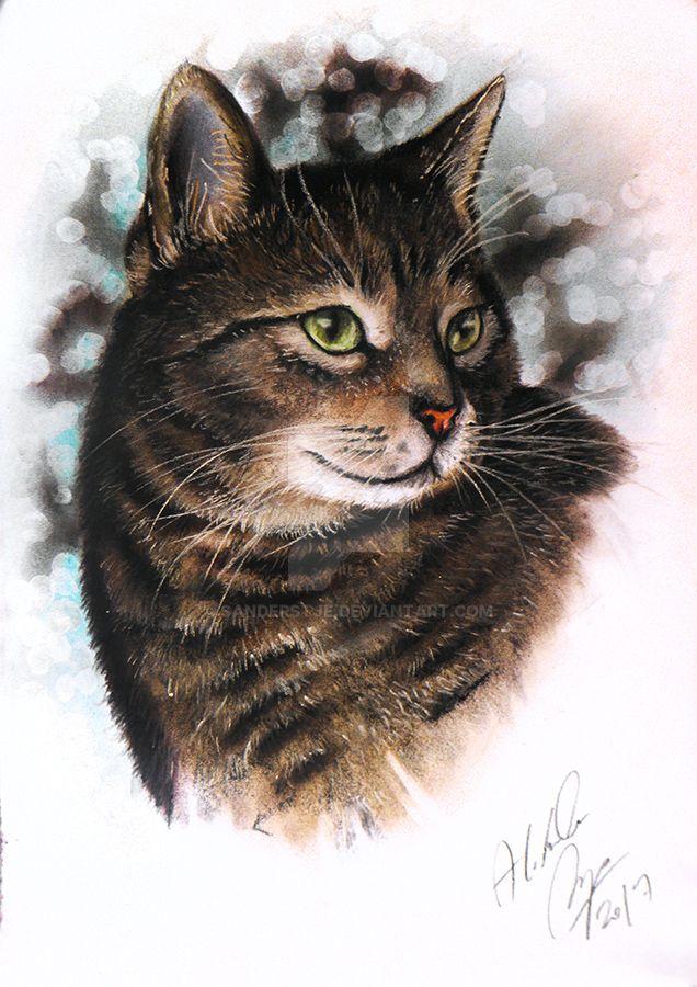 Cat portrait by sanderstje
