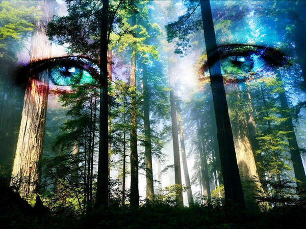 eyes_of_the_forest_by_grimwolf.jpg