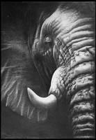 Elephant by FredrikEriksson1