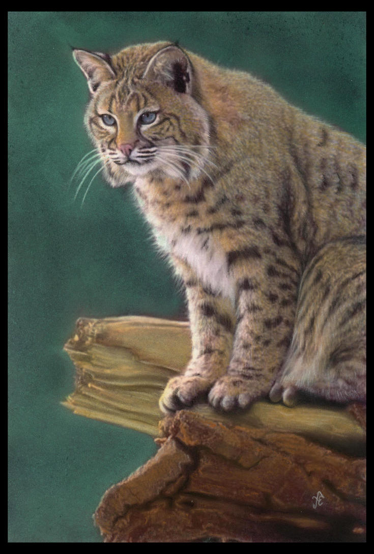 Bobcat by FredrikEriksson1