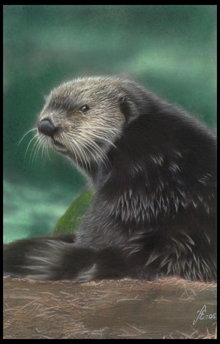 Otter by FredrikEriksson1