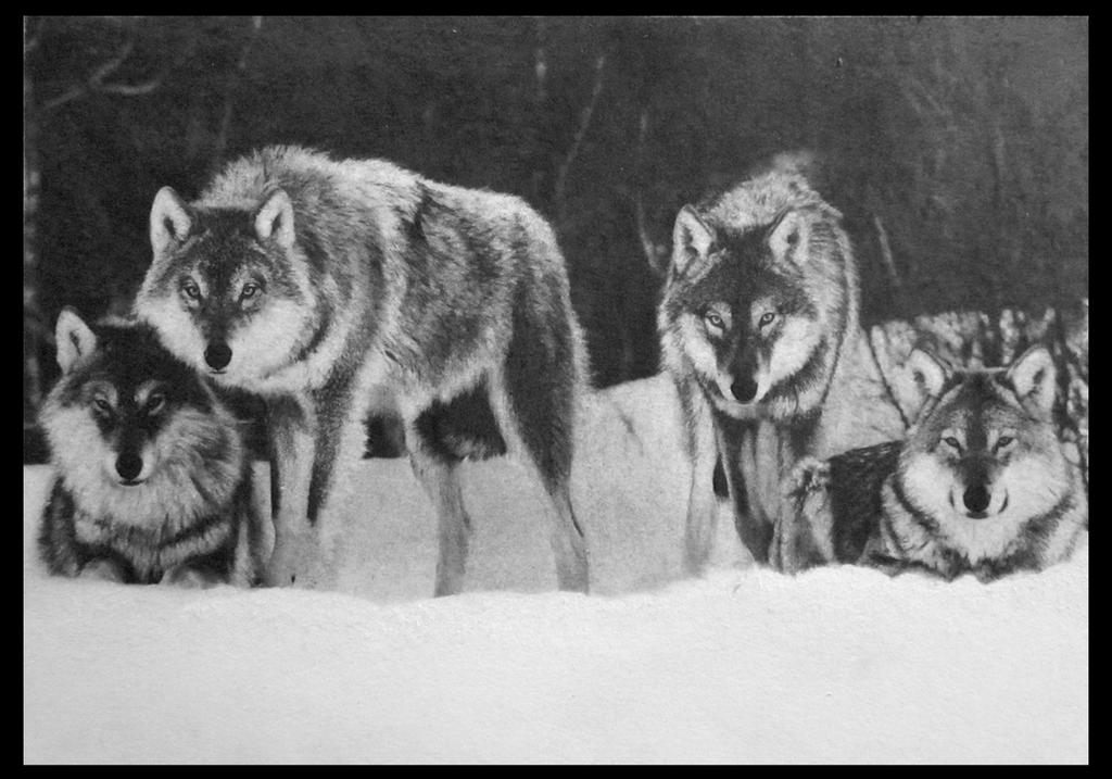 Wolf Pack by FredrikEriksson1