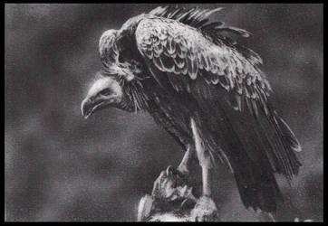 Vulture 2 by FredrikEriksson1